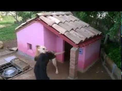 pedane per cani cuccia per cani in muratura