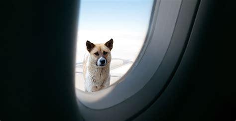 come portare un in aereo come portare il in aereo viaggi e vacanze
