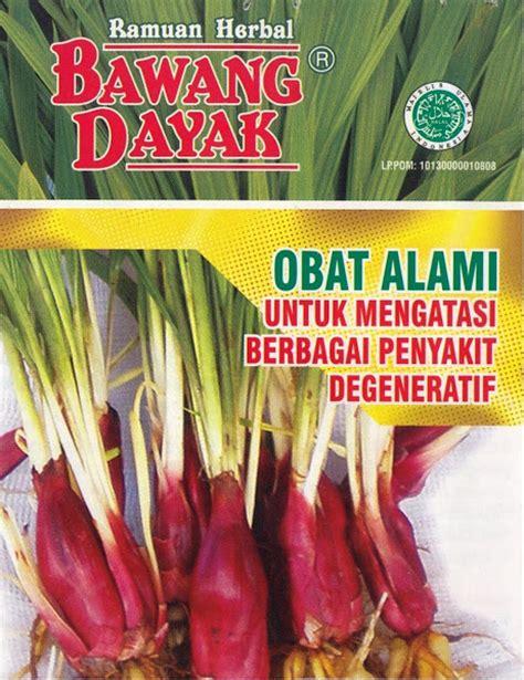 Obat Herbal Bawang Dayak bawangdayak bawang dayak obat alami dari kalimantan