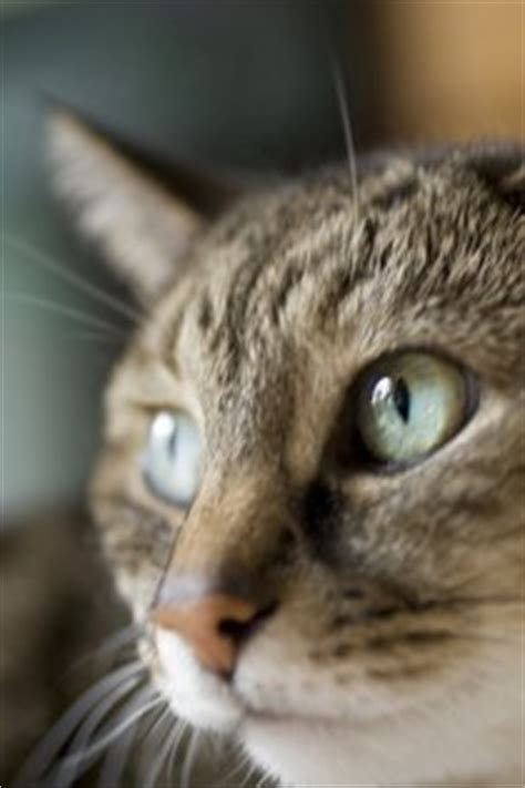 8 Health Problems That Cats Can Get by Top 12 Most Common Feline Health Problems Pt 3