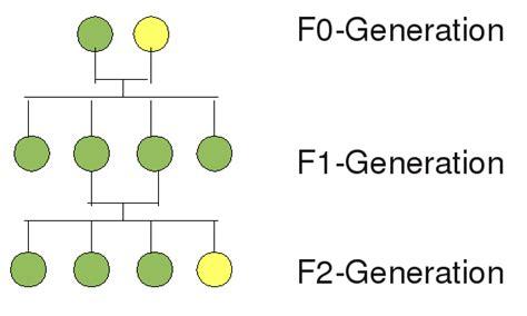 Grundkurs Biologie: Klassische Genetik 1 – Mendelsche Regeln | Dance ... F2