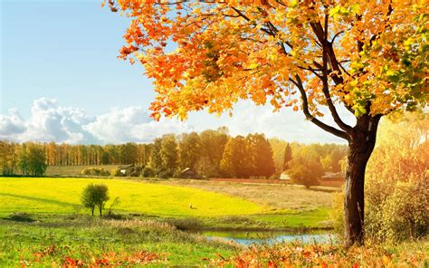 beautiful trees 2560x1600 beautiful tree desktop pc and mac wallpaper