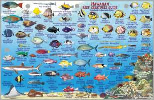 Hawaiian Reef Fish Guide Types Of Fish Hawaiian Names Pictures to pin