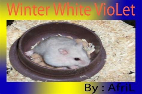 Botol Minum Hamster botol minum hamster