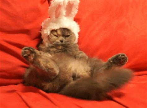 cat gif rabbits gifs find on giphy