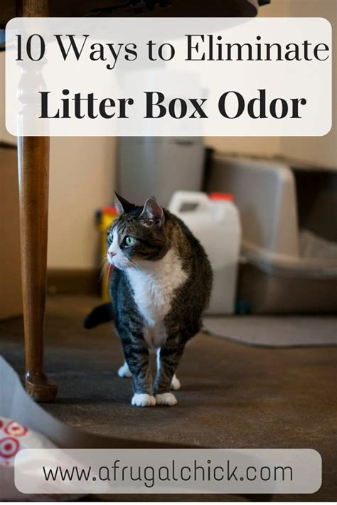 Cat Stool Smelly by Litter Box Smell Solutions