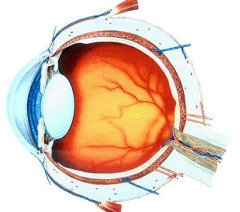Eye Mate Vitamin Kesehatan Mata tips menjaga mata tetap sehat di depan komputer