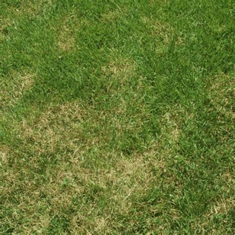 Types Of Stickers In Grass how to get rid of lawn stickers how to get rid of stuff