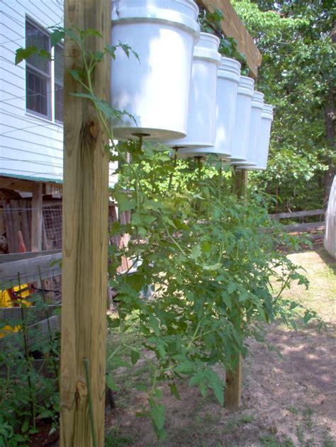 tomato buckets gardening ideas