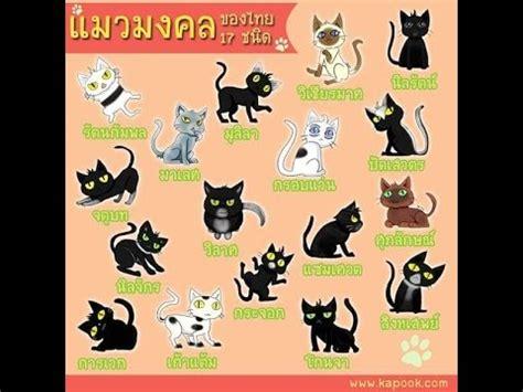 Cat Story cat story ep 8 แมวมงคลของไทย 17 ชน ด