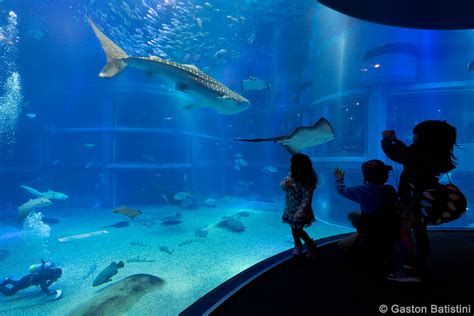 japanese aquarium osaka aquarium kaiyukan japan the osaka aquarium