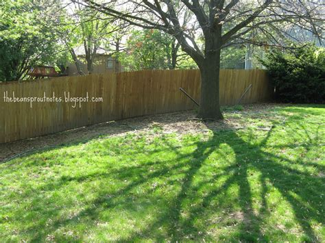 shade tree for small backyard the bean sprout notes building my backyard oasis in the