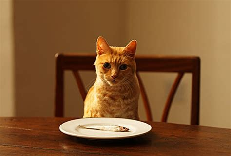 can you feed a cat food foods your cat can eat pictures