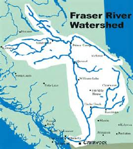 learn more about the fraser river 171 great river fishing