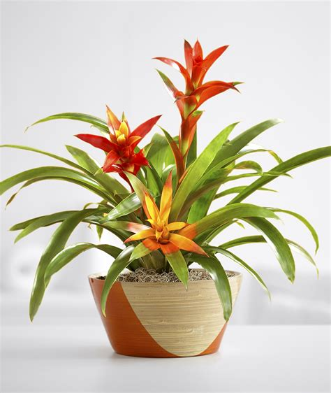 no sun plants indoor 10 plants you can t kill no green thumb needed