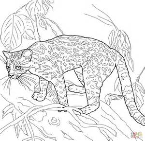 coloring pictures of wild cats wild cat pages printable coloring pages