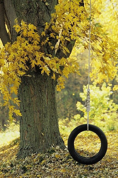 tree with tire swing 17 best images about tree swings and old barns on