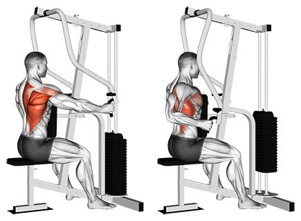 seated cable row exercise database back jase stuart mens health mentor