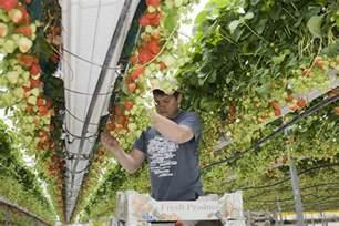 Diseases That Affect Plants - blog pomona fruits buy fruit trees soft fruit bushes
