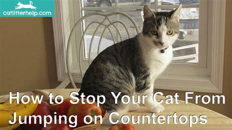 how to stop your cat jumping on counters and tables prevent your cat from jumping on counters and tables