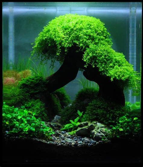 Aquascaping Inspiration by Planted Aquarium Aquascaping And Aquarium On