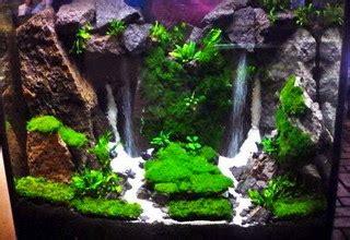 membuat aquascape air terjun tips ikan