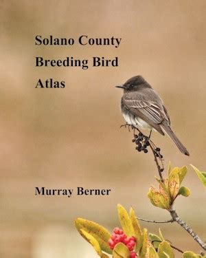 solano county section 8 sonoma county breeding bird atlas year five madrone