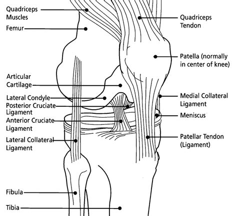 diagram of knee cog knee from cycling