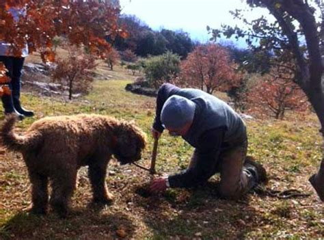 conna 238 tre et cuisiner la truffe avignon et provence