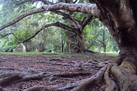 haunted garden  stock photo public domain pictures