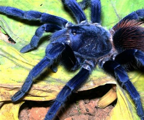 imagenes raras nuevas las diez nuevas especies mas raras del mundo taringa