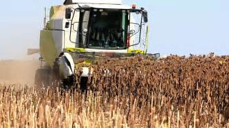 sunflower harvesting machine combine harvester and sunflower combine harvester in the