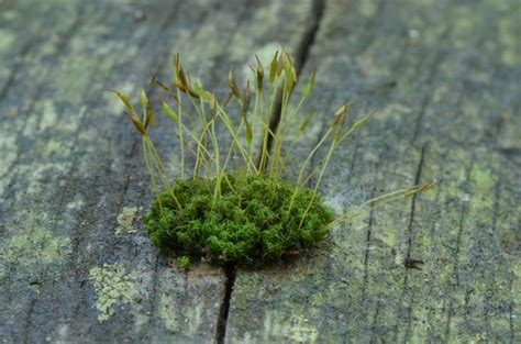ask the moss about heavy metals