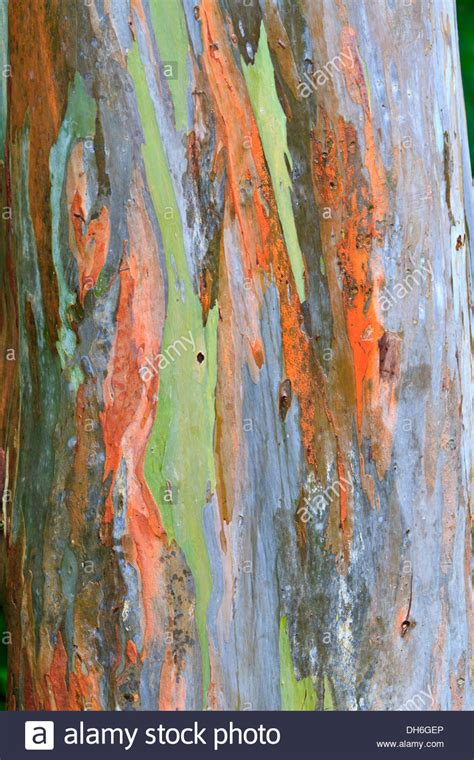 bark color top 28 colored bark stock photos colored skin the