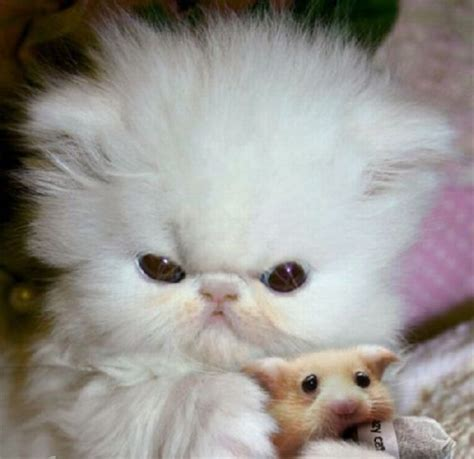 8 Most Adorable Animal by Baby Kittens Cats Are Soooo Cats