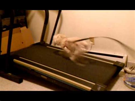 how to a to run on a treadmill running on treadmill