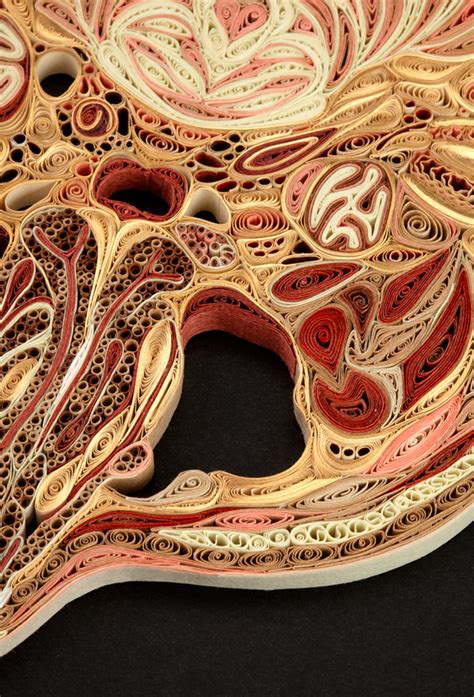 Anatomy Cross Sections by Anatomical Cross Sections Made With Quilled Paper By