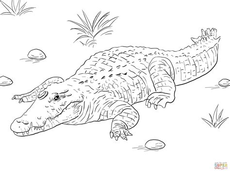 african nile crocodile coloring page free printable