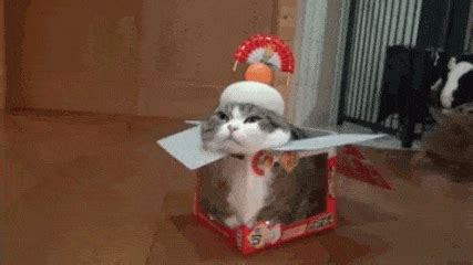 cat gifs cat gif find on giphy