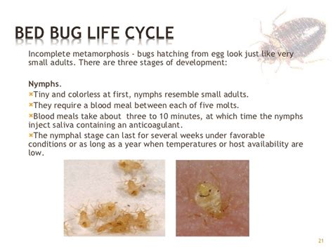 how long does it take for bed bugs to appear how long does it take for bed bugs to hatch 28 images