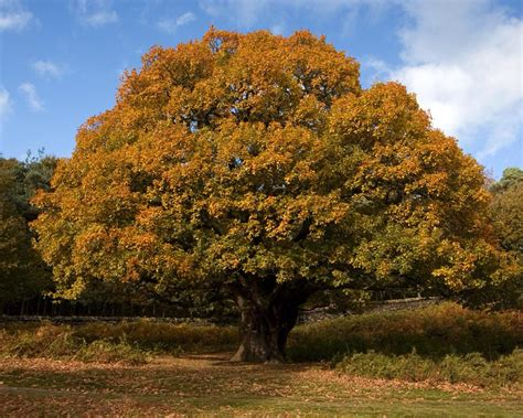 woodland forest plants and trees the plant life in the temperate deciduous forest