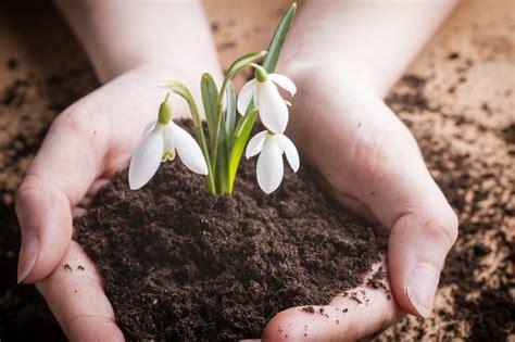 wann stauden umpflanzen schneegl 246 ckchen umpflanzen 187 so wird s gemacht
