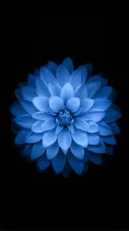 Blue Lotus Photography Blue Lotus Iphone 7 Wallpaper Idrop News
