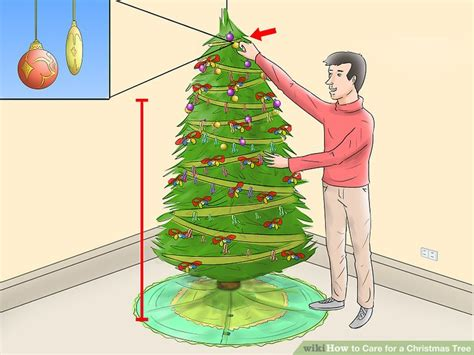 putting aspirin in christmas tree water how to care for a