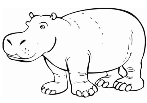 coloring page hippo hippopotamus 37 animals printable coloring pages