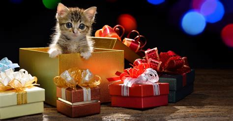 cattime s 2014 holiday gift guide cattime