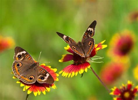 Die Sch Nsten Schmetterlinge 4950 by 12augen Auf Jpg 140354 Jpg
