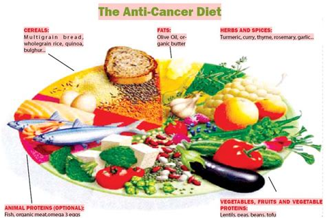 cancer diet for dogs cancer starving dogs diet plan pets world