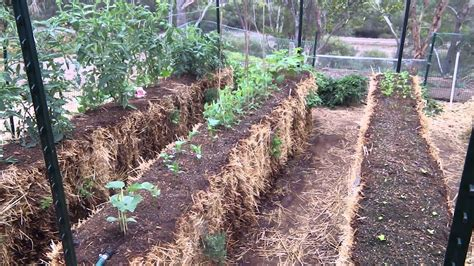 My straw bale garden   YouTube