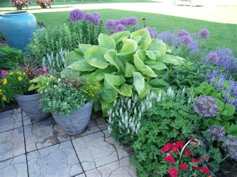 hosta flower beds 69 best images about hosta bed on pinterest shade plants
